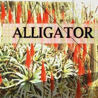 Alligatorcd